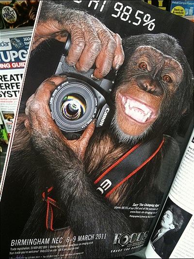 Yes! Monkey Business!